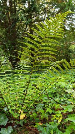walk inthewoods fern green plants
