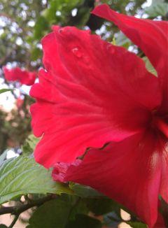 flower red closeup blossom