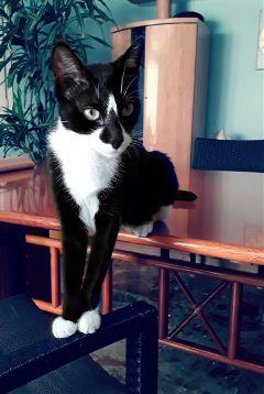 freetoedit pets mypet cute catsofpicsart