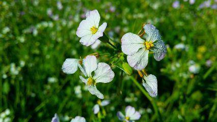 flower plants morningdew water field