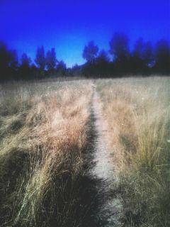 field grass nature path trail freetoedit