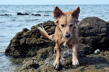 beach photography petsandanimals