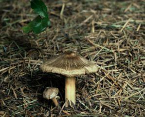 autumn closeup mushroom nature photography