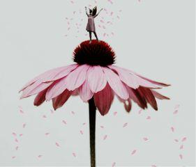 freetoedit pink blooming petals flower