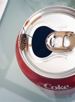 freetoedit bee coke drink