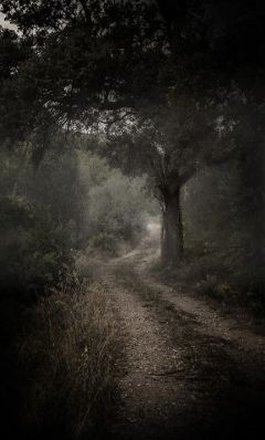 freetoedit landscape picsart wood