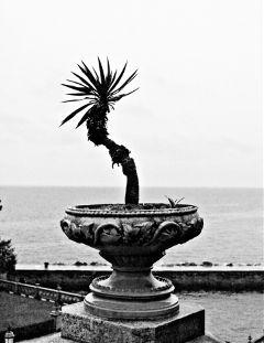 palm blackandwhite rainyday
