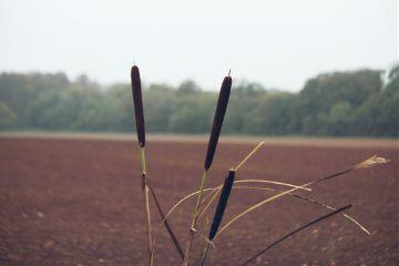 nature plant adjusttool dodgereffect outandabout