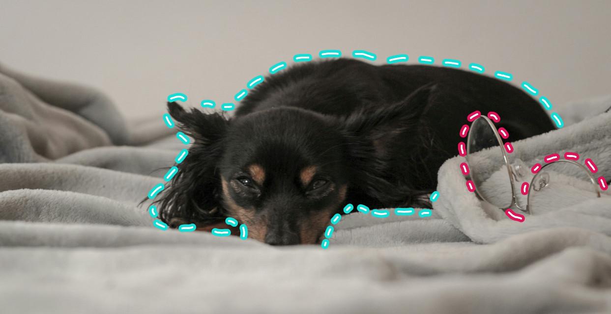 #FreeToEdit #Dog #Neon