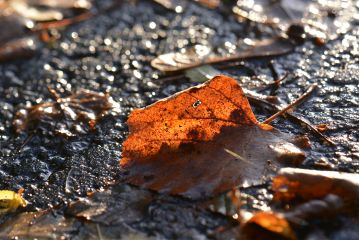 photography nature macro leaf leaves