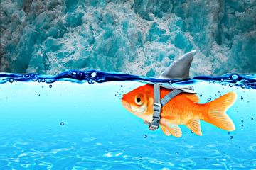 alaska freetoedit fish ocean cold