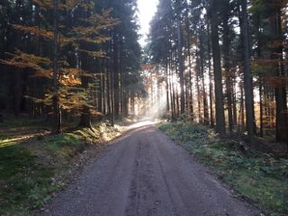 freetoedit autumn forest eveningmood