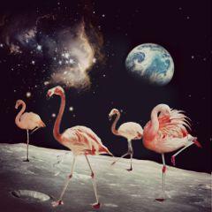 freetoedit flamingoremix spacetraveler stickers