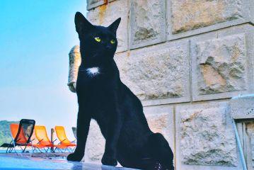 freetoedit cats montenegro summer pets