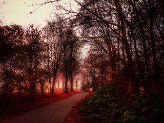 myedit nature forest magic fantasy