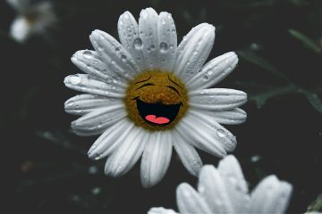 daisy flowers rain mygarden stickers