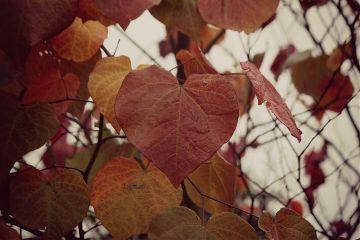 autumnvibes autumncolors autumnal leaves adjusttool
