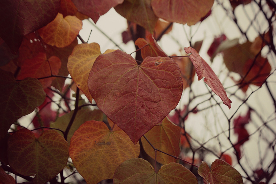 Autumn leaves are awesome #autumnvibes #autumncolors #autumnal #leaves #adjusttool #twilighteffect #outandabout