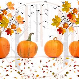 freetoedit dailyremix dailyremixmechallenge pumpkinremix fall