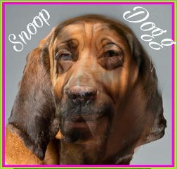 freetoedit snoopdogg