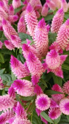plant closeup plnk colorful