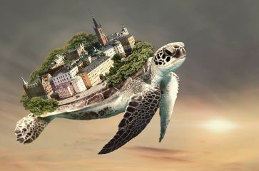 stockholm surreal turtle surreal