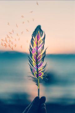 feather freetoedit