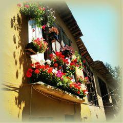 ماسوله blossom سنتی