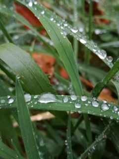 raindrop drop water rain grass