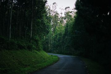 forest intothewoods green nature road freetoedit