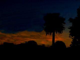 freetoedit sunset redsunset trees photography