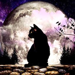 freetoedit catdailyremix dailyremix dailyremixmechallenge moon