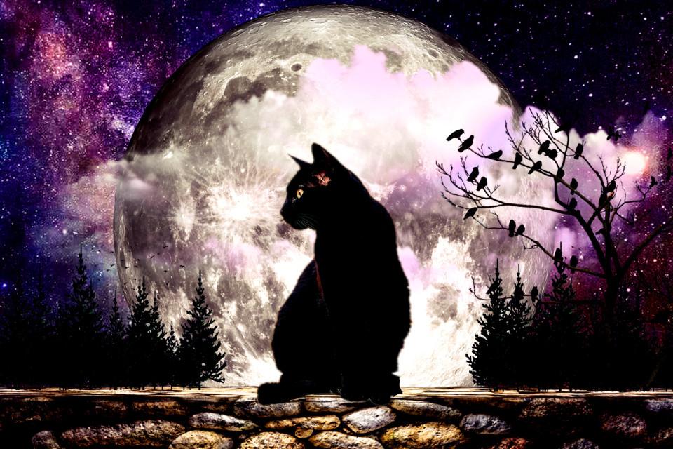 #catdailyremix #dailyremix #dailyremixmechallenge #moon
