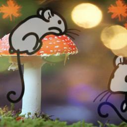 freetoedit mushroom colorpaint