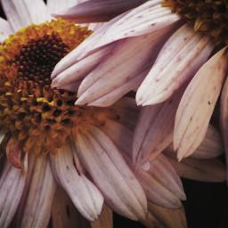 vintage flower naturephotography night wildlife