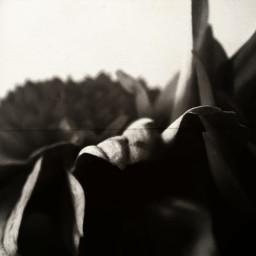 blackandwhitephotography black flower wild photography