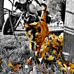 colorsplash cat motorcycle