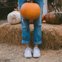 freetoedit girl pumpkin legs halloween