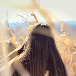 photography photoshoot cornfield corn depthoffield freetoedit