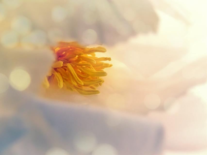 #macropics #macro #flower #bokeheffect