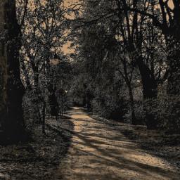 autumnvibes autumnleaves november2017 naturephotography artisticeffect