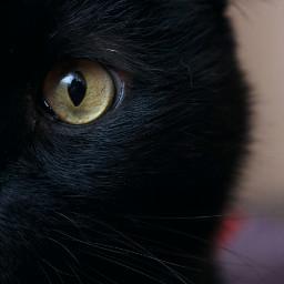 freetoedit cat cateyes photography blackcat