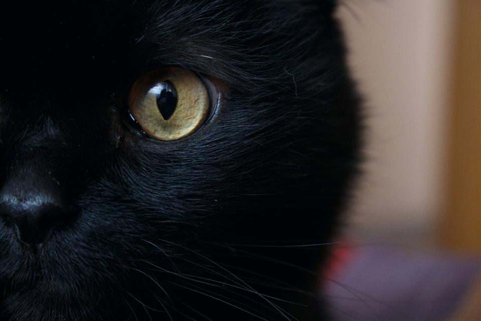 #cat #cateyes #photography #blackcat