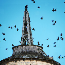 freetoedit birds lighthouse
