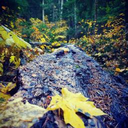 autumn leaves trees wanderlust hikingadventures