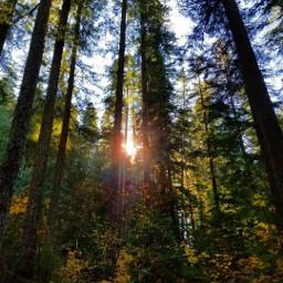 autumn nature photography optoutside wanderlust