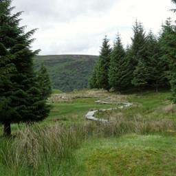 dpcfields freetoedit scotland