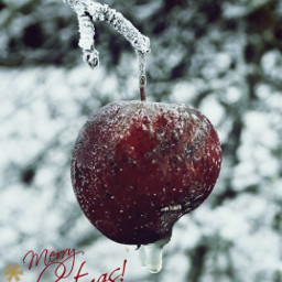 merrychristmas decorating christmasspirit emotions joy freetoedit