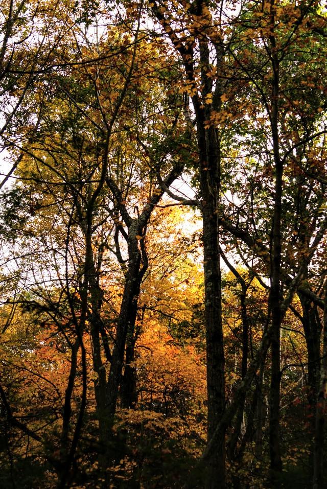#nature #autumn #woodedland #colorful