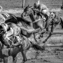 freetoedit horses horse horserace jockey